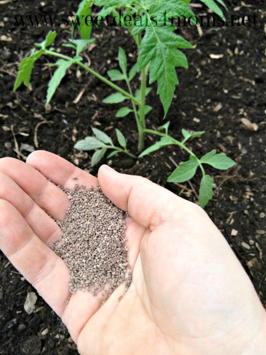 ecoscraps plant food tomato